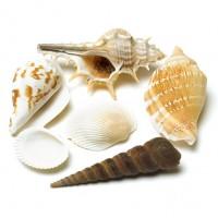 بسته صدف و ستاره دریایی